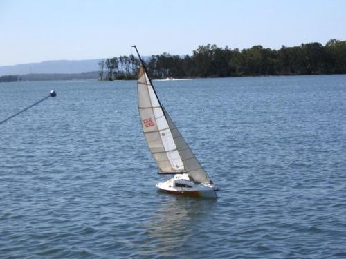 wildcard_sailing_878